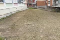Manutenzione verde scuola carrara gioia 3