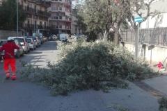 potatura alberi1