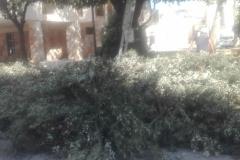 potatura alberi4