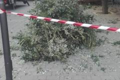 potatura alberi5